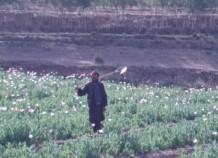 Poppy field, Zabul, Afghanistan 2006